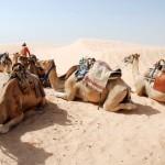Sahara – fotorelacja