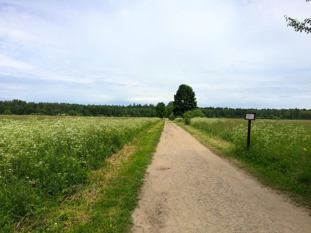 Długa droga od Parku Carskiego do Białowieskiego Parku Narodowego
