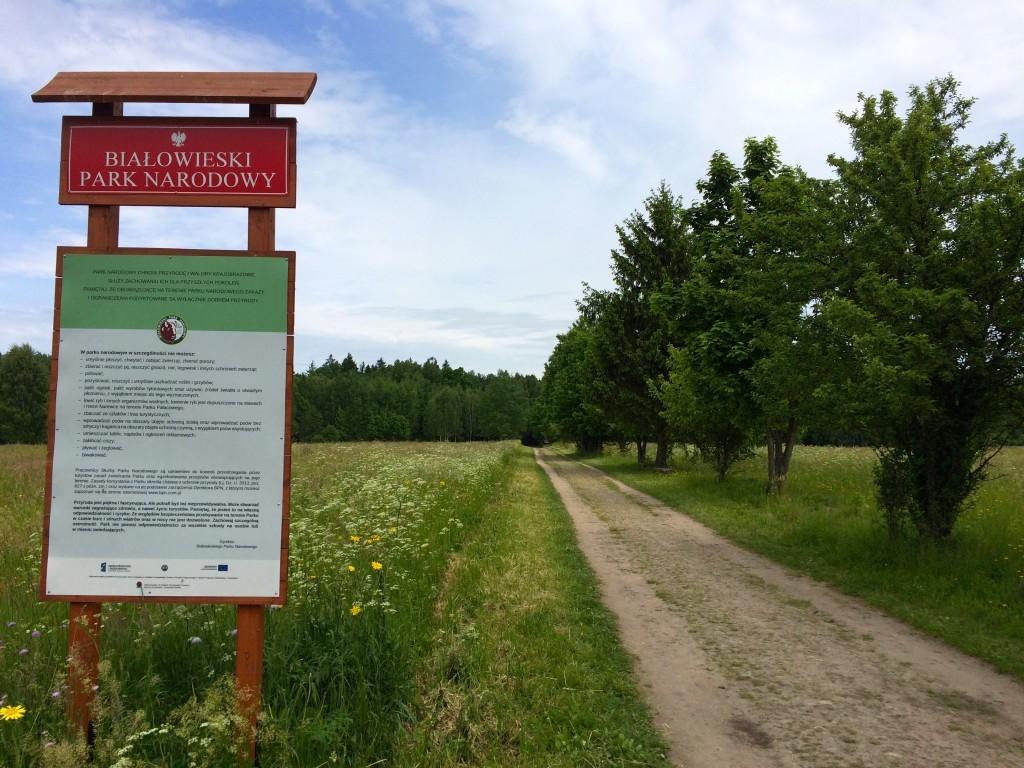Droga prowadząca do Białowieskiego Parku Narodowego