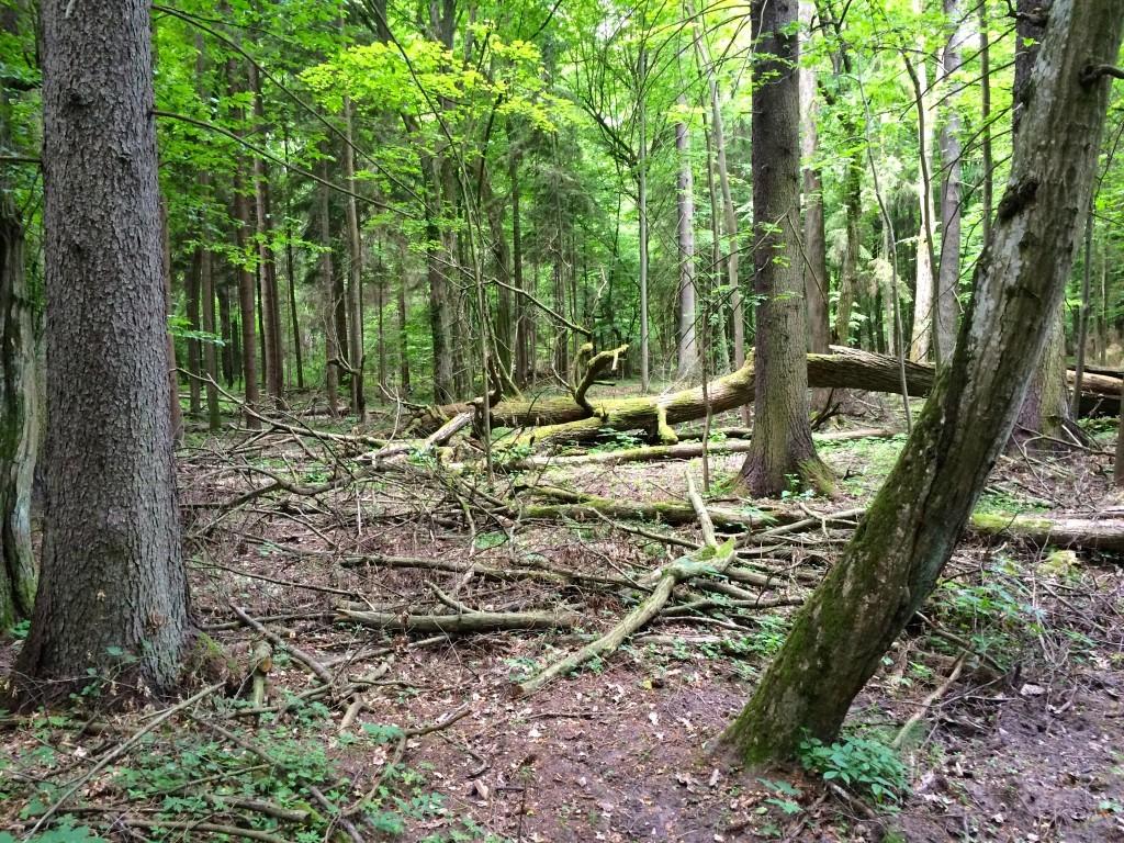 Nikt nie usuwa powalonych drzew - tutaj o wszystkim decyduje natura