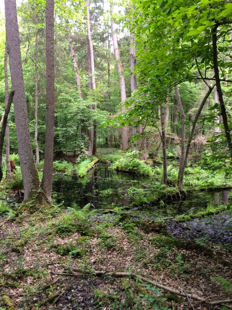 Białowieża Białowieski Park Narodowy Puszcza Białowieska