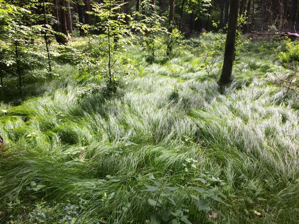 Trawa jak dywan - piękna roślinność