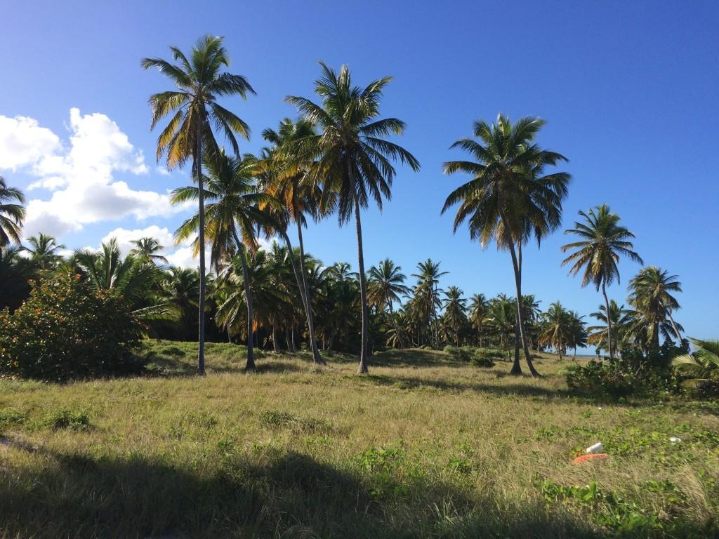 Wyspa jest bardzo zielona :)