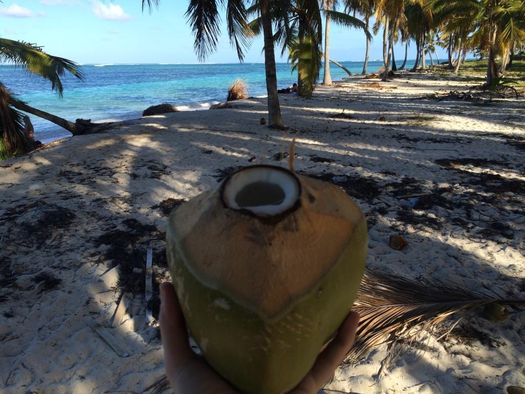 Kokosy prosto z drzewa.