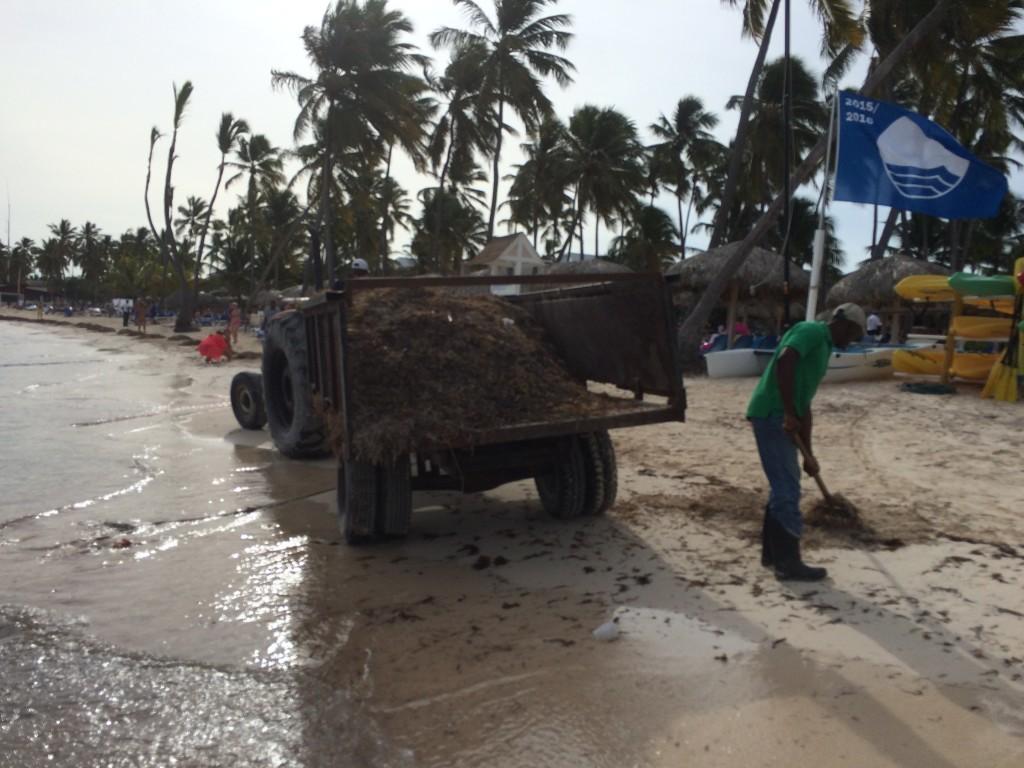 Podczas mojego pobytu w Punta Cana w grudniu 2015 roku wyspa zmaga się z ogromnym problemem, który zmniejsza zyski z turystyki. Większość plaży zanieczyszczona jest morskimi glonami. Morze każdego dnia wyrzuca ich na brzeg tak wiele, że obsługa hotelu nie jest w stanie oczyścić plaż, nie wspominając o bardzo zanieczyszczonej wodzie, która traci swój piękny, naturalny kolor.