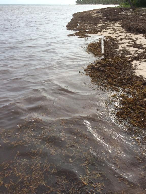 Zanieczyszczona woda przez glony - o tym problemie nie mówi się w żadnym z biur podróży, jest to tajemnica.
