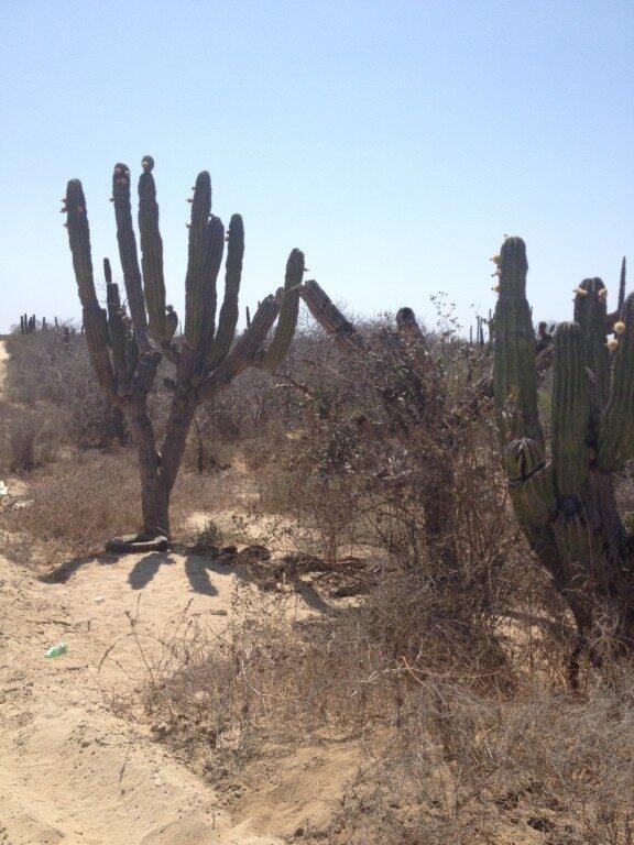 Baja California Los Cabos Meksyk