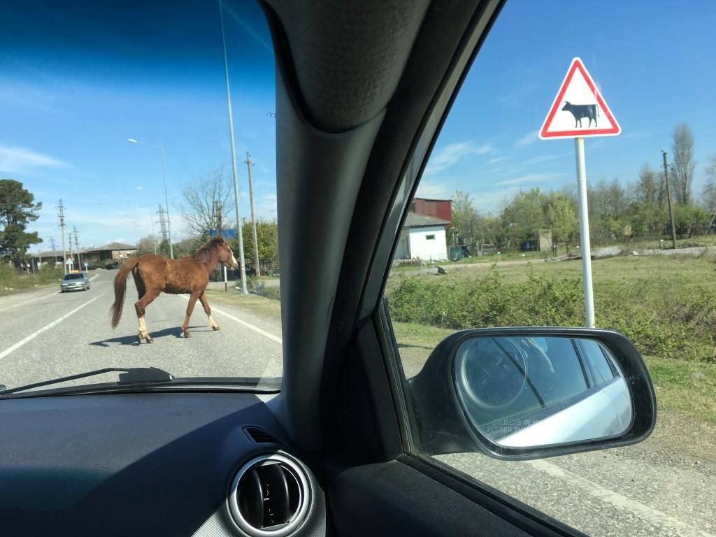 Znaki drogowe mówią prawdę. Trzeba zachować ostrożność podczas jazdy samochodem.
