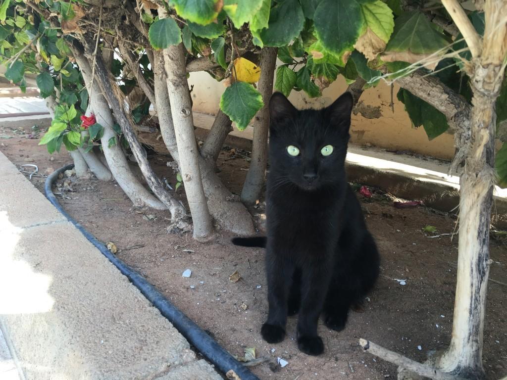 Cypr to kocia wyspa.Zostały one tu sprowadzone przez statki w IV wieku, by tępić szczury oraz węże. Dzisiaj na każdym kroku możemy spotkaćwylegujące się na słońcu koty.