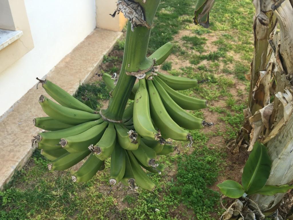 Banany… minionki były by zachwycone :)