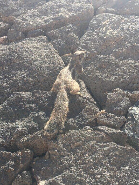Wyspa jest wymarzonym domem dla wielu zwierząt, gryzoni oraz ptaków. Po ulicach miasteczek biega dużo przyjaźnie nastawionych wiewiórek.