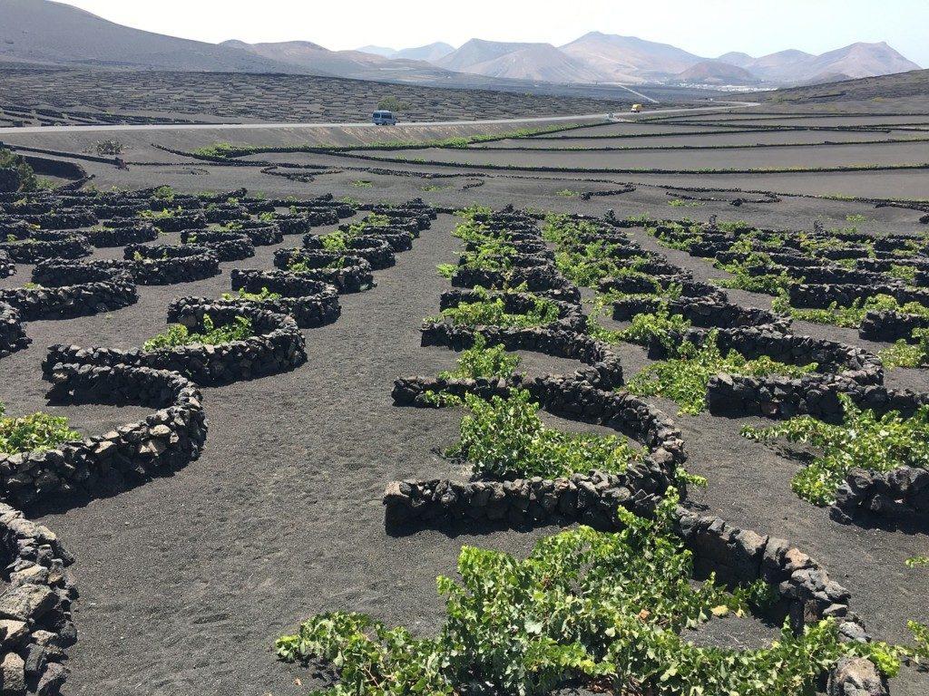 Lanzarote winnice